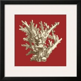 Coral on Red I Art
