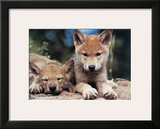 Spring Wolf Pups Framed Giclee Print by Art Wolfe