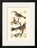 British Birds and Eggs III Art