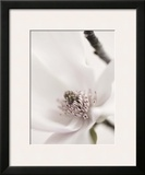Magnolia Blush II Art by Christine Zalewski