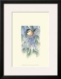 Chickadee in White Pine Posters by Janet Mandel