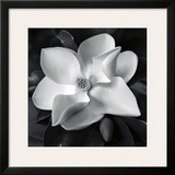 Magnolia Posters by Debra Van Swearingen