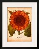 L'Herbier VI Print by Besler Basilius