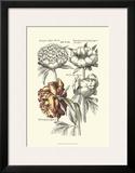 Tinted Floral I Art by Besler Basilius