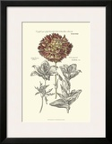 Tinted Floral IV Poster by Besler Basilius
