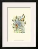 House Finches Prints by Janet Mandel