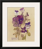 Wild Pansy Poster by Charles Rennie Mackintosh