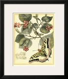 Whimsical Butterflies I Prints