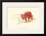 Fringetail Goldfish Posters by S. Matsubara