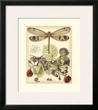 Whimsical Dragonflies II Print