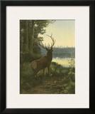 Elk Poster by Oliver Kemp