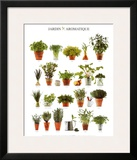 Aromatic Garden Prints