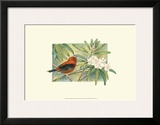 Scarlet Tanager Prints by Janet Mandel