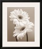 Two Daisies Art by Carol Sharp