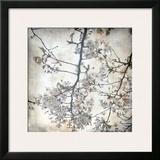 Cherry Blossom Tree V Print by Tony Koukos