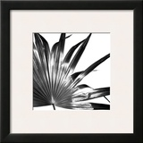 Black and White Palms I Framed Giclee Print by Jason Johnson