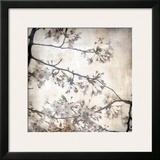 Cherry Blossom Tree VI Prints by Tony Koukos