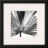 Black and White Palms III Framed Giclee Print by Jason Johnson