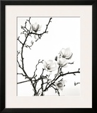 Branch of Magnolia Prints by Henry Wilson