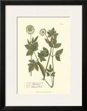 Leaves IV Posters by Johann Wilhelm Weinmann