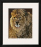 Power and Presence: African Lion Framed Giclee Print by Joni Johnson-godsy
