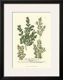 Leaves II Print by Johann Wilhelm Weinmann