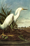 Audubon Snowy Egret Bird Plastic Sign Plastic Sign