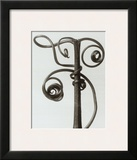 Curcubita, Pumpkin Tendril Poster by Karl Blossfeldt