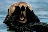 Sea Otter (In Water) Plastic Sign Plastikskilt