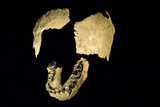 Skull Bones of Homo Habilis Print by Javier Trueba