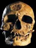 Cro-Magnon Skull Photographic Print by Javier Trueba