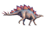 Stegosaurus Dinosaur Prints by Joe Tucciarone