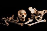 Human Fossils, Sima De Los Huesos Prints by Javier Trueba