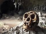 Homo Floresiensis Skull Photographic Print by Javier Trueba