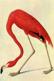 Audubon Flamingo Bird Plastic Sign Plastic Sign