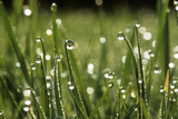 Dew Drops on Grass Photographic Print by Jeremy Walker
