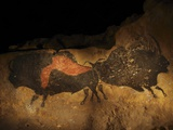 Stone-age Cave Paintings, Lascaux, France Premium Photographic Print by Javier Trueba