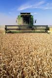 Combine Harvester Working In a Wheat Field Fotografisk tryk af Jeremy Walker