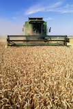 Combine Harvester Working In a Wheat Field Photographic Print by Jeremy Walker