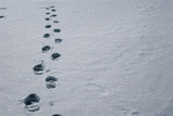 Footprints In Snow Photographic Print by David Vaughan