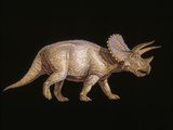 Triceratops Dinosaur Photographic Print by Joe Tucciarone