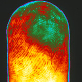 Thermogram of a Human Finger Photographic Print by Dr. Arthur Tucker