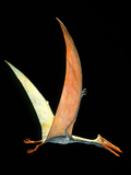 Artwork of the Flying Reptile Quetzalcoatlus Sp. Photographic Print by Joe Tucciarone