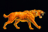 Artwork of a Sabre-toothed Cat (Smilodon Sp.) Photographic Print by Joe Tucciarone