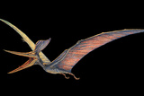 Pteranodon Pterosaur Photographic Print by Joe Tucciarone