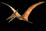 Artwork of the Pterosaur, Pteranodon Sp. Posters by Joe Tucciarone