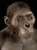 Australopithecus Afarensis Photographic Print by Javier Trueba
