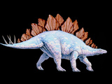Artwork of Stegosaurus Dinosaur, Stegosaurus Sp. Photographic Print by Joe Tucciarone