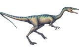 Compsognathus Dinosaur, Computer Artwork Prints by Joe Tucciarone