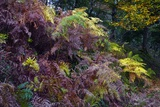 Bracken In Exmoor National Park Print by Dr. Keith Wheeler